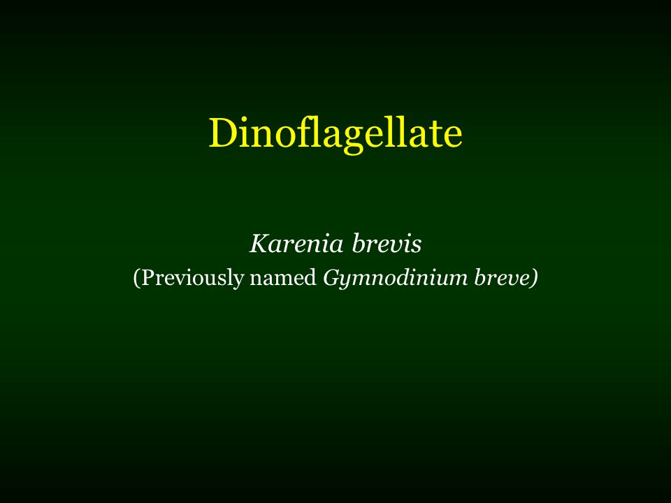 Dinoflagellate Karenia brevis (Previously named Gymnodinium breve)