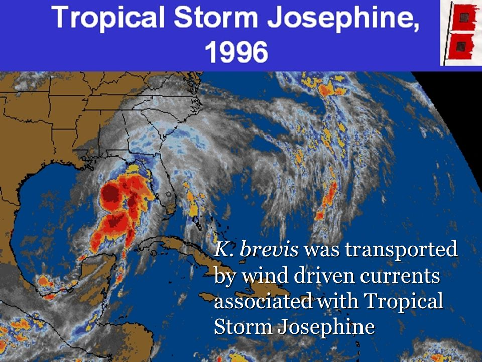 K. brevis was transported by wind driven currents associated with Tropical Storm Josephine