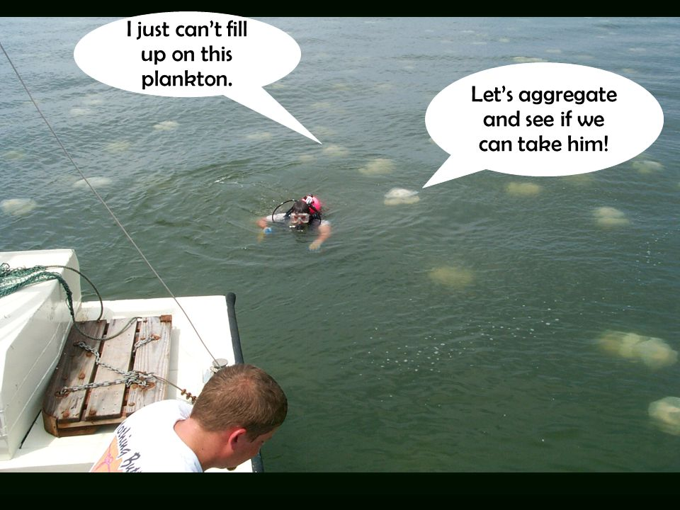 I just can't fill up on this plankton. Let's aggregate and see if we can take him!