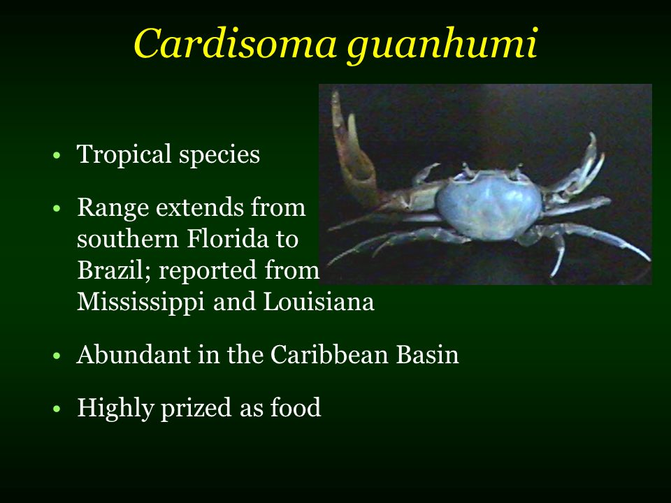 Cardisoma guanhumi Tropical species Range extends from southern Florida to Brazil; reported from Mississippi and Louisiana Abundant in the Caribbean B