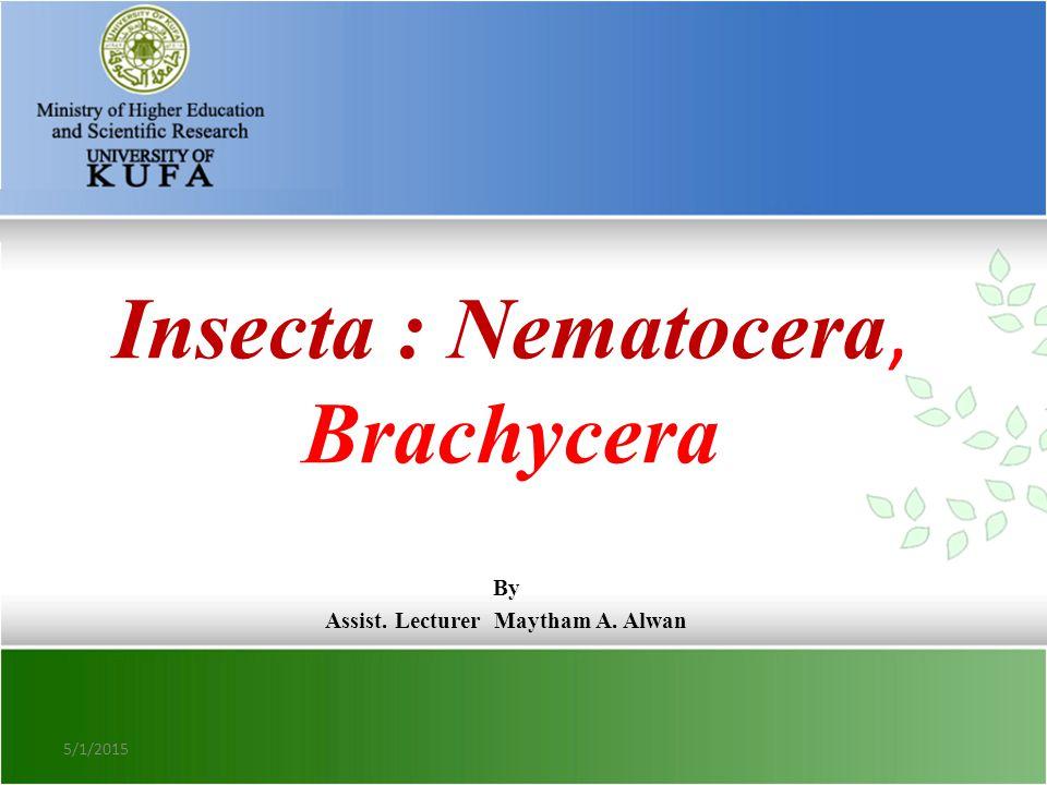 Insecta : Nematocera, Brachycera By Assist. Lecturer Maytham A. Alwan 5/1/2015