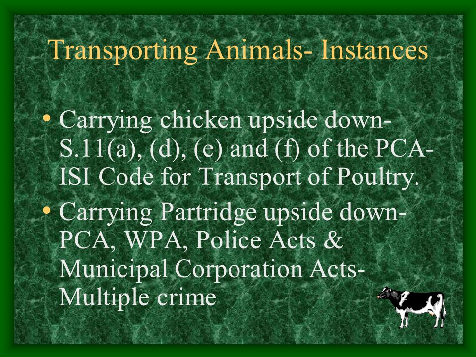 Transporting Animals- Instances Carrying chicken upside down- S.11(a), (d), (e) and (f) of the PCA- ISI Code for Transport of Poultry. Carrying Partri