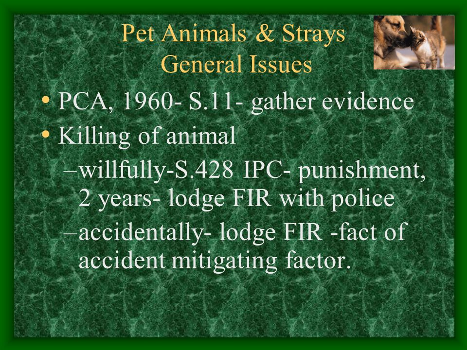 Pet Animals & Strays General Issues PCA, 1960- S.11- gather evidence Killing of animal –willfully-S.428 IPC- punishment, 2 years- lodge FIR with polic
