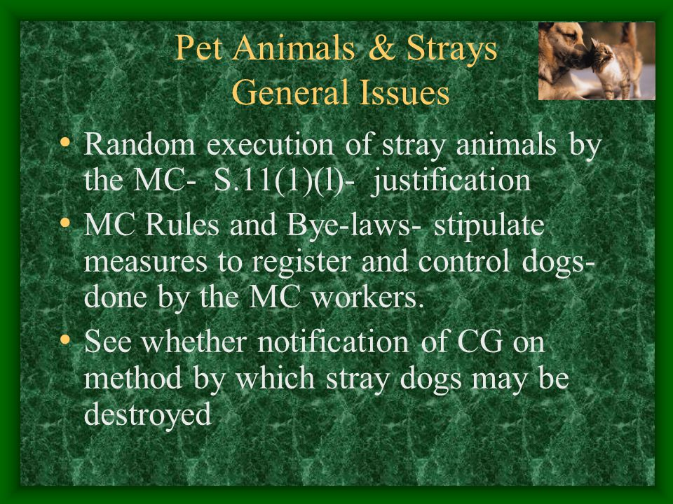 Pet Animals & Strays General Issues Random execution of stray animals by the MC- S.11(1)(l)- justification MC Rules and Bye-laws- stipulate measures t