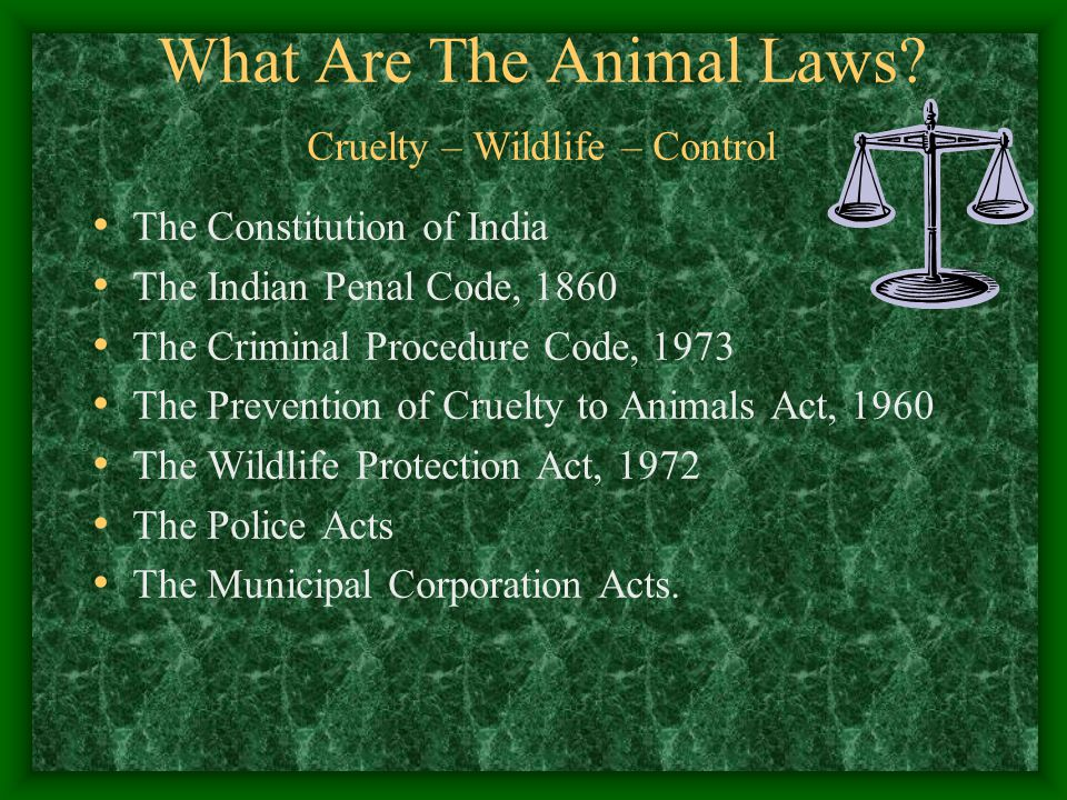 Wild Animals & The Wildlife Protection Act, 1972 Cutting of tree having nests- offence of hunting.