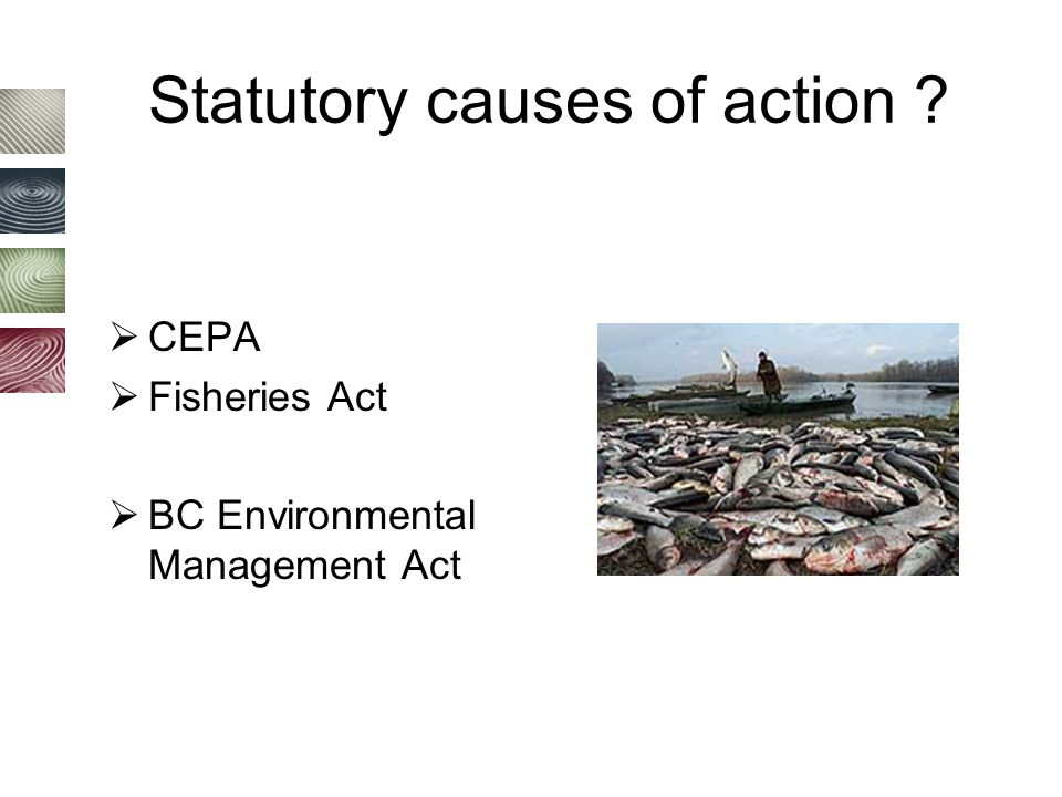Statutory causes of action ?  CEPA  Fisheries Act  BC Environmental Management Act