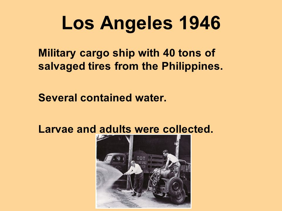 Los Angeles 1946 Military cargo ship with 40 tons of salvaged tires from the Philippines. Several contained water. Larvae and adults were collected.