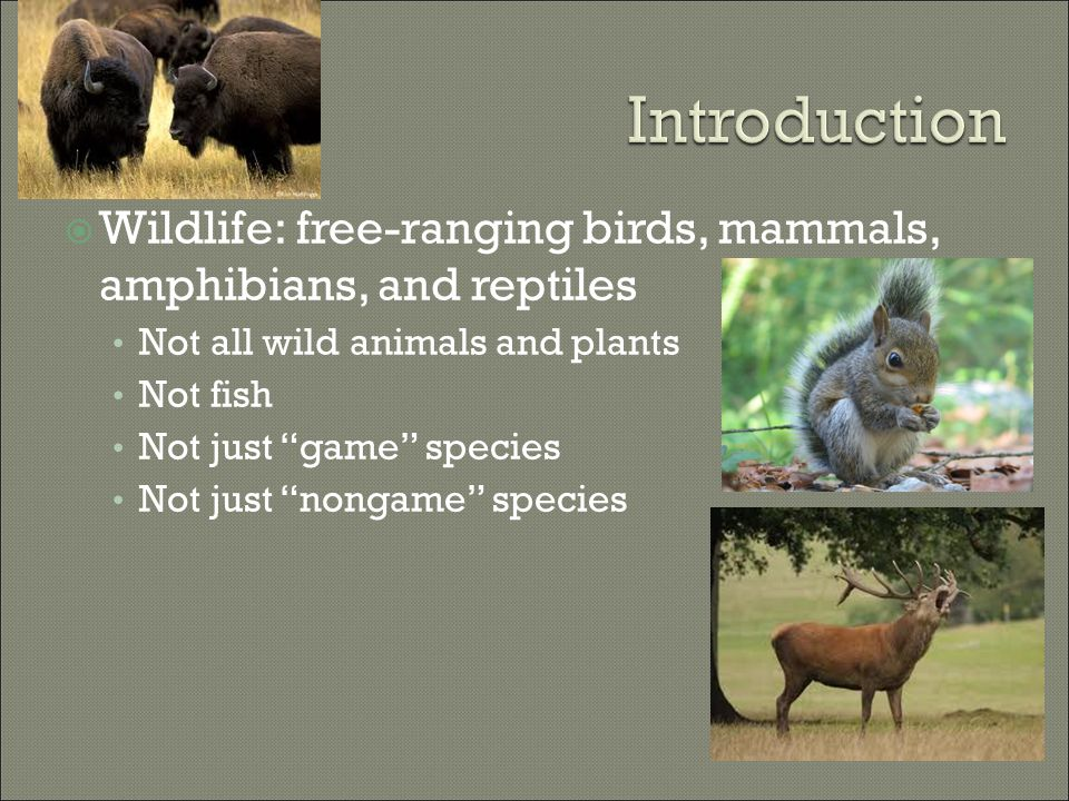 " Wildlife: free-ranging birds, mammals, amphibians, and reptiles Not all wild animals and plants Not fish Not just ""game"" species Not just ""nongame"""