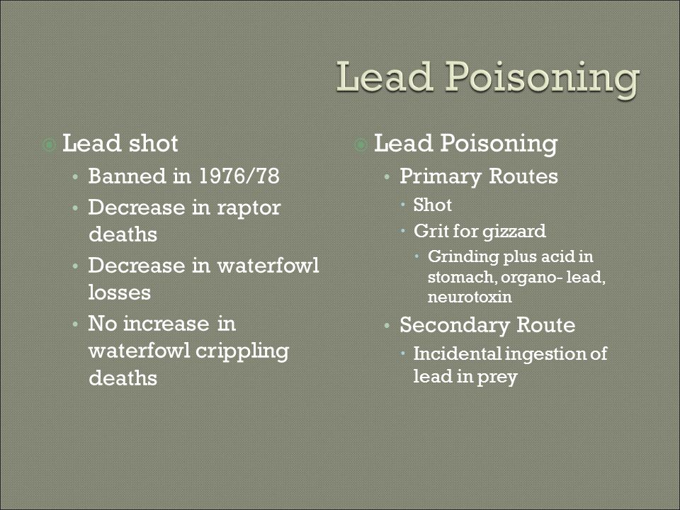  Lead shot Banned in 1976/78 Decrease in raptor deaths Decrease in waterfowl losses No increase in waterfowl crippling deaths  Lead Poisoning Primar