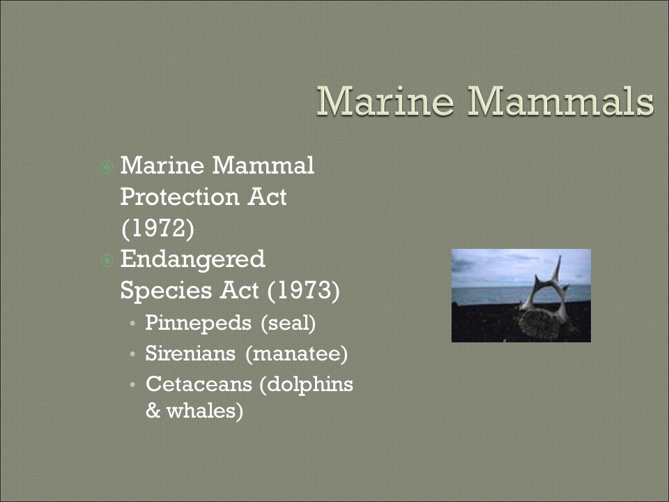  Marine Mammal Protection Act (1972)  Endangered Species Act (1973) Pinnepeds (seal) Sirenians (manatee) Cetaceans (dolphins & whales)