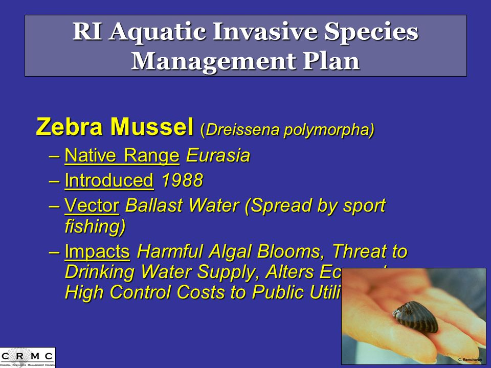 RI Aquatic Invasive Species Management Plan Zebra Mussel (Dreissena polymorpha) –Native Range Eurasia –Introduced 1988 –Vector Ballast Water (Spread by sport fishing) –Impacts Harmful Algal Blooms, Threat to Drinking Water Supply, Alters Ecosystem, High Control Costs to Public Utilities