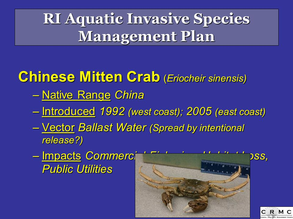 Chinese Mitten Crab (Eriocheir sinensis) –Native Range China –Introduced 1992 (west coast); 2005 (east coast) –Vector Ballast Water (Spread by intentional release ) –Impacts Commercial Fisheries, Habitat Loss, Public Utilities www.serc.si.edu