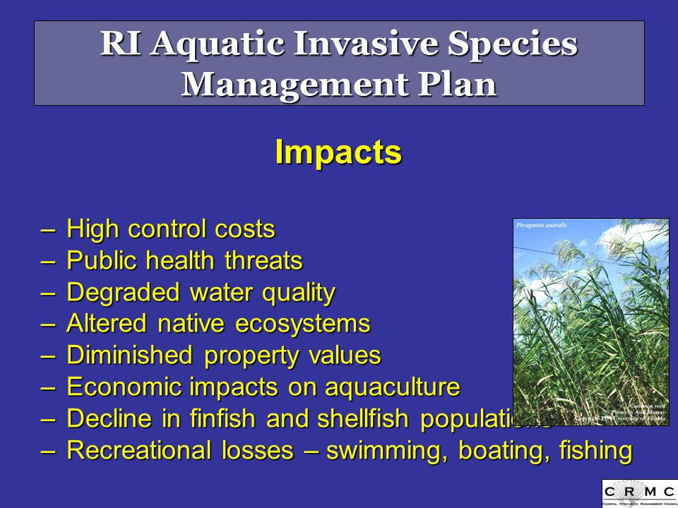 Impacts –High control costs –Public health threats –Degraded water quality –Altered native ecosystems –Diminished property values –Economic impacts on aquaculture –Decline in finfish and shellfish populations –Recreational losses – swimming, boating, fishing RI Aquatic Invasive Species Management Plan