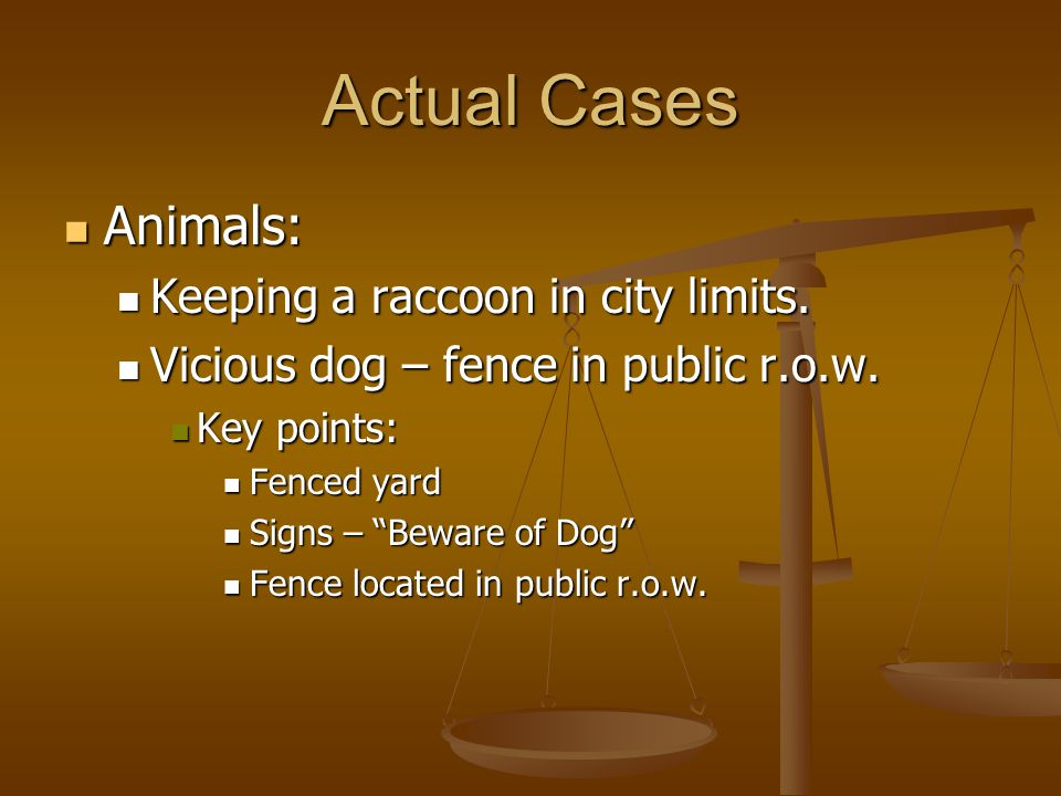 Actual Cases Animals: Animals: Keeping a raccoon in city limits.