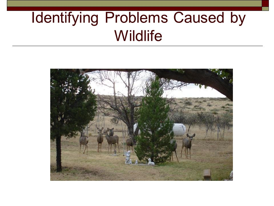 Identifying Problems Caused by Wildlife