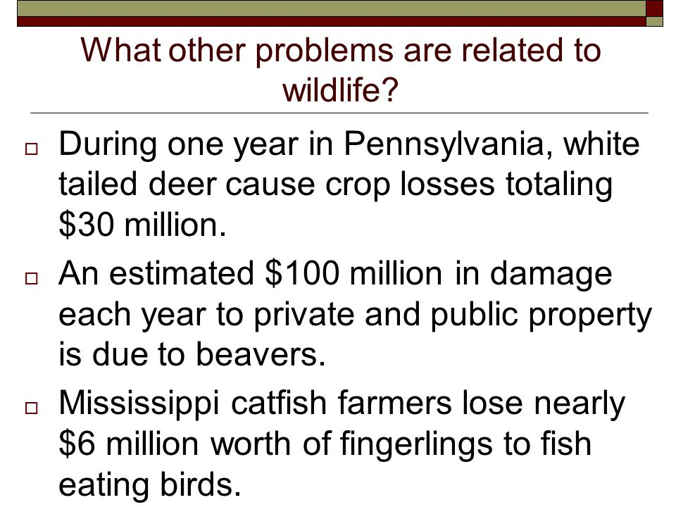 What other problems are related to wildlife.