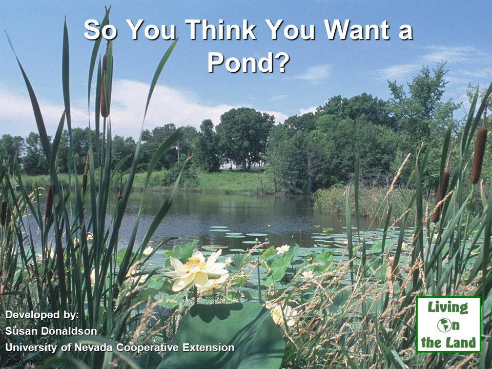 So You Think You Want a Pond.