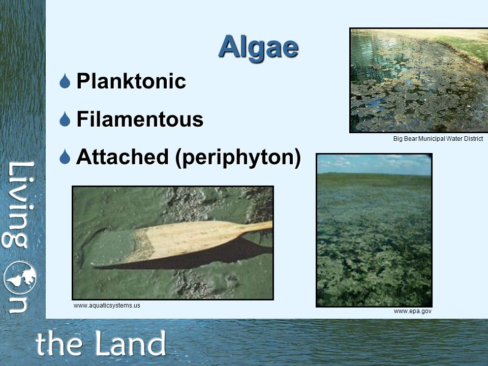 Algae  Planktonic  Filamentous  Attached (periphyton) www.epa.gov www.aquaticsystems.us Big Bear Municipal Water District