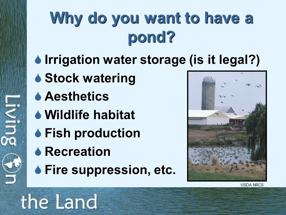 Pros and cons of pond ownership  Aesthetics versus ugliness  Water storage versus legal issues  Livestock watering versus water quality  Recreation versus public health, safety, risk management  Habitat versus nuisance species USDA NRCS