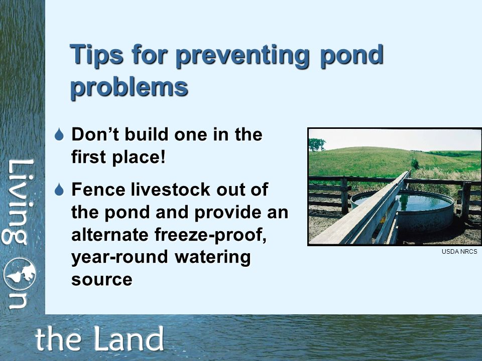 Tips for preventing pond problems  Don't build one in the first place.