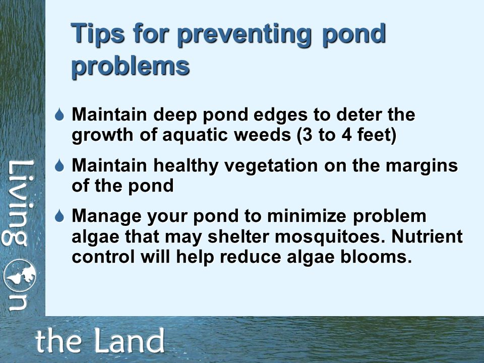 Tips for preventing pond problems  Maintain deep pond edges to deter the growth of aquatic weeds (3 to 4 feet)  Maintain healthy vegetation on the margins of the pond  Manage your pond to minimize problem algae that may shelter mosquitoes.