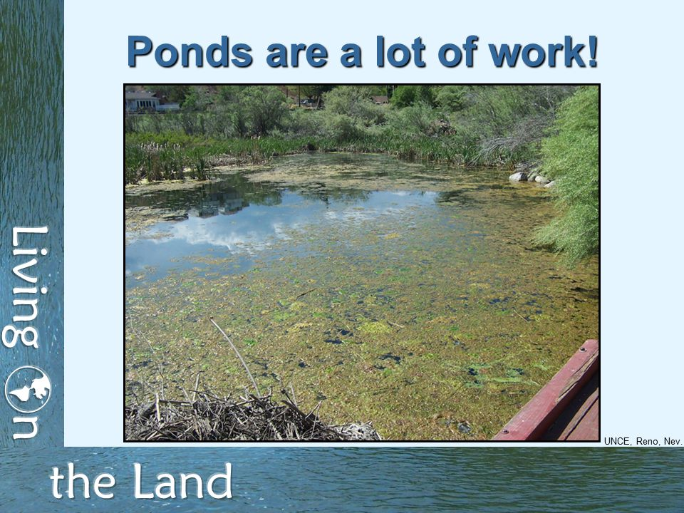 Ponds are a lot of work! UNCE, Reno, Nev.