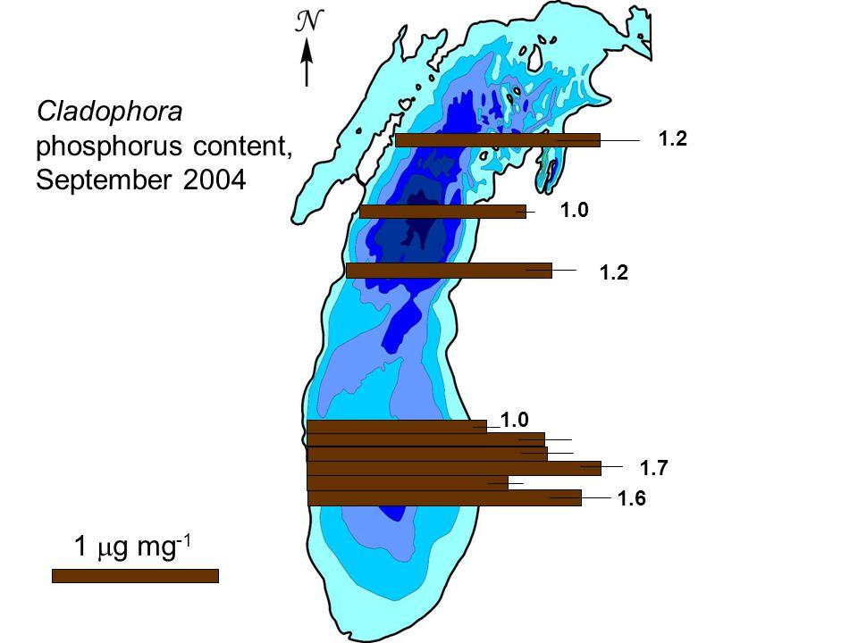 1  g mg -1 1.2 1.0 1.2 1.0 1.7 1.6 Cladophora phosphorus content, September 2004