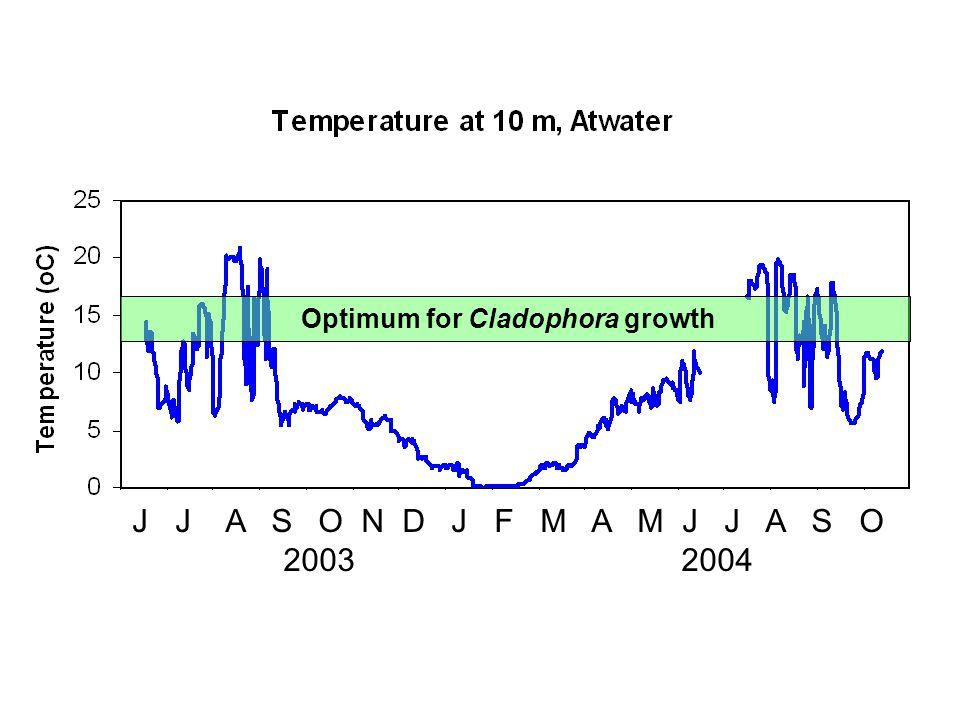 J J A S O N D J F M A M J J A S O 2003 2004 Optimum for Cladophora growth