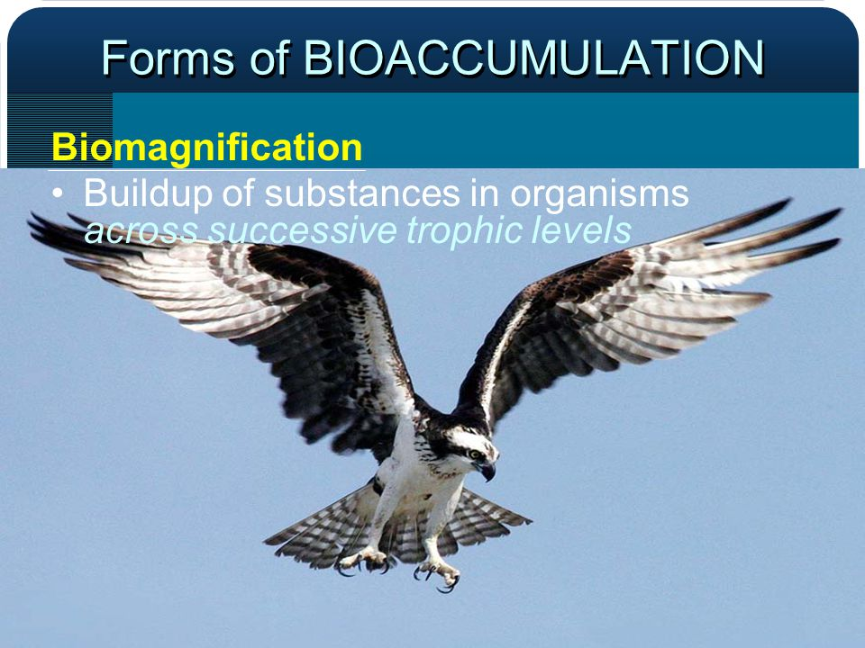 Forms of BIOACCUMULATION Biomagnification Buildup of substances in organisms across successive trophic levels