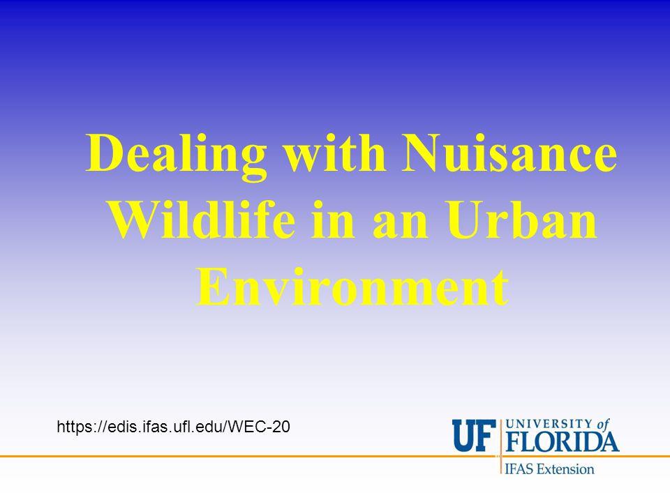 Dealing with Nuisance Wildlife in an Urban Environment https://edis.ifas.ufl.edu/WEC-20