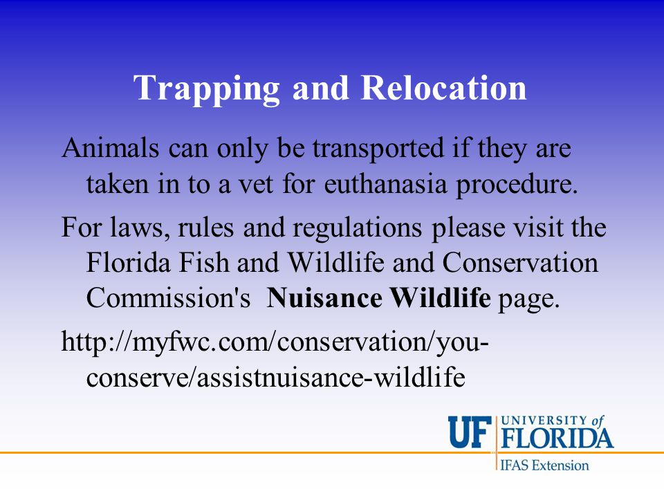 Trapping and Relocation Animals can only be transported if they are taken in to a vet for euthanasia procedure. For laws, rules and regulations please