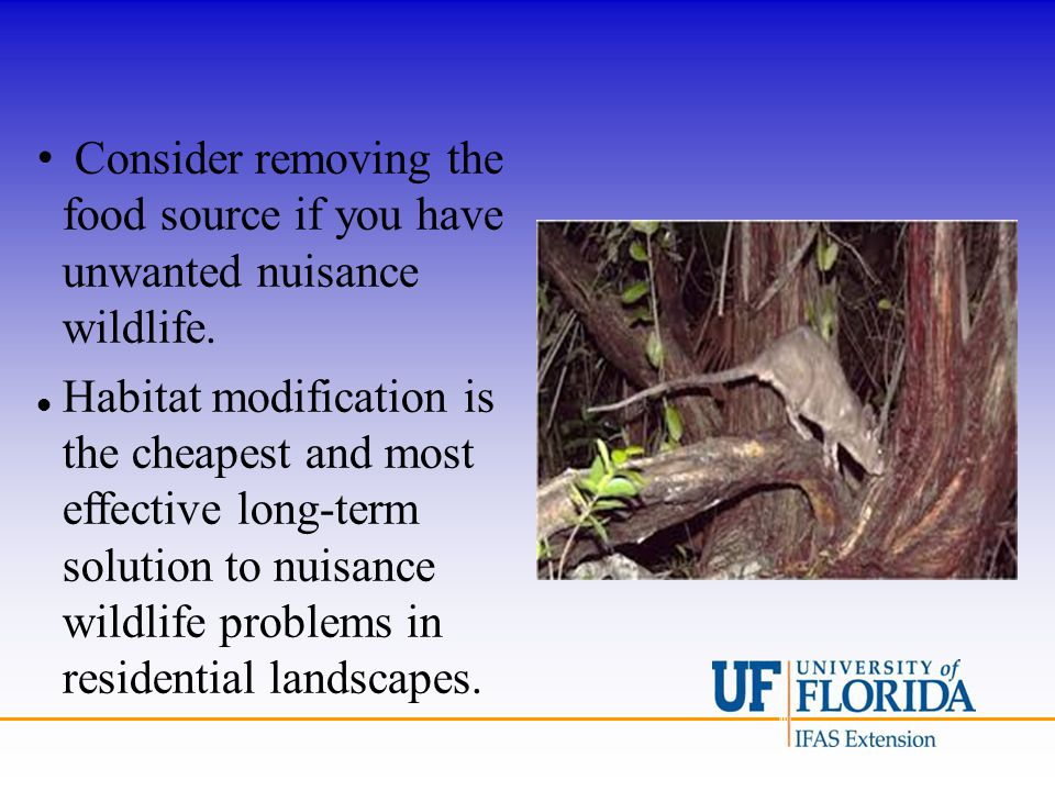 Consider removing the food source if you have unwanted nuisance wildlife. Habitat modification is the cheapest and most effective long-term solution t