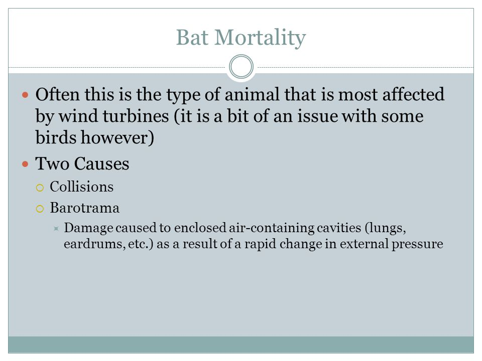 Bat Mortality Often this is the type of animal that is most affected by wind turbines (it is a bit of an issue with some birds however) Two Causes  C