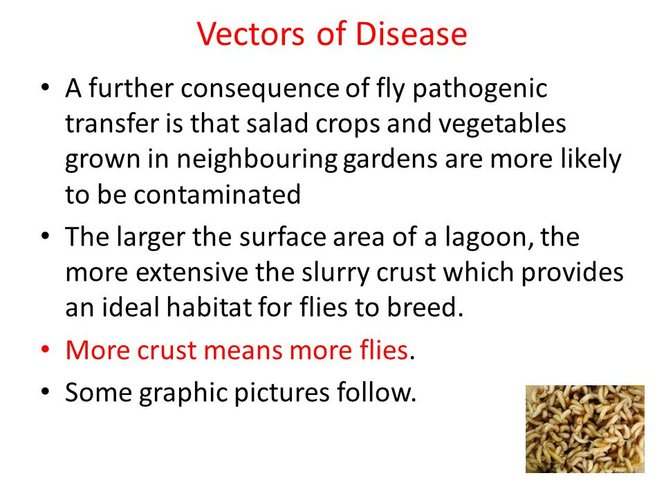 Vectors of Disease A further consequence of fly pathogenic transfer is that salad crops and vegetables grown in neighbouring gardens are more likely t
