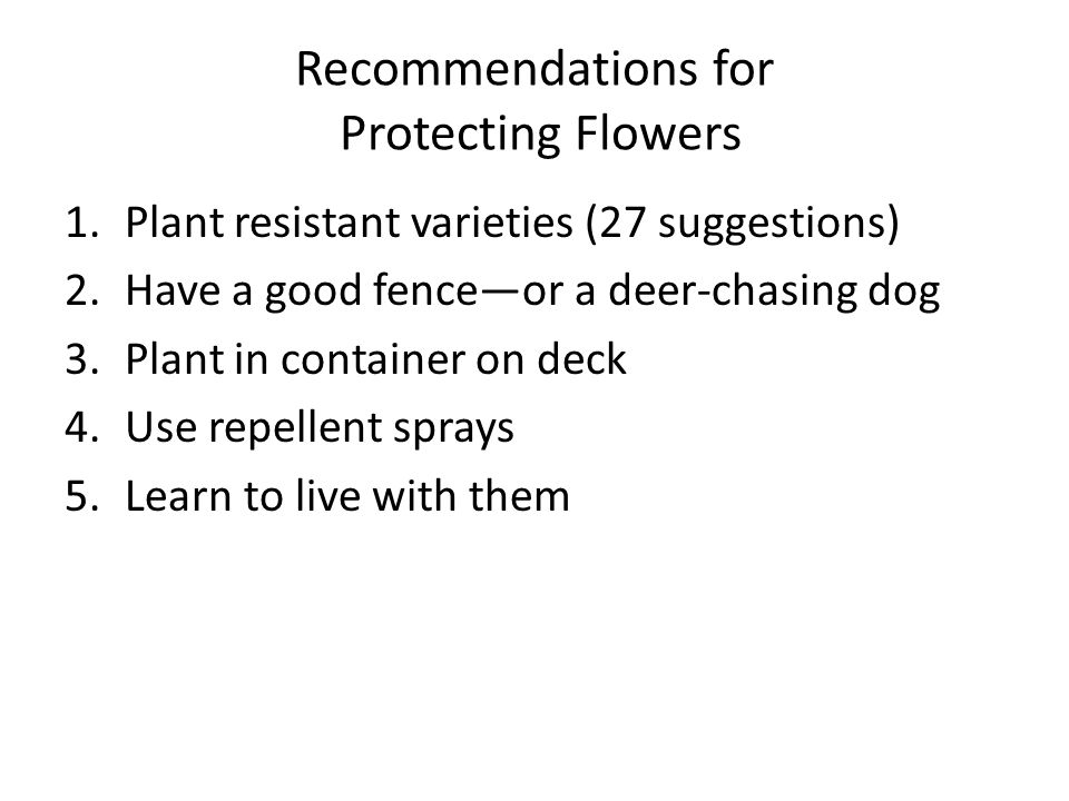 Recommendations for Protecting Flowers 1.Plant resistant varieties (27 suggestions) 2.Have a good fence—or a deer-chasing dog 3.Plant in container on deck 4.Use repellent sprays 5.Learn to live with them