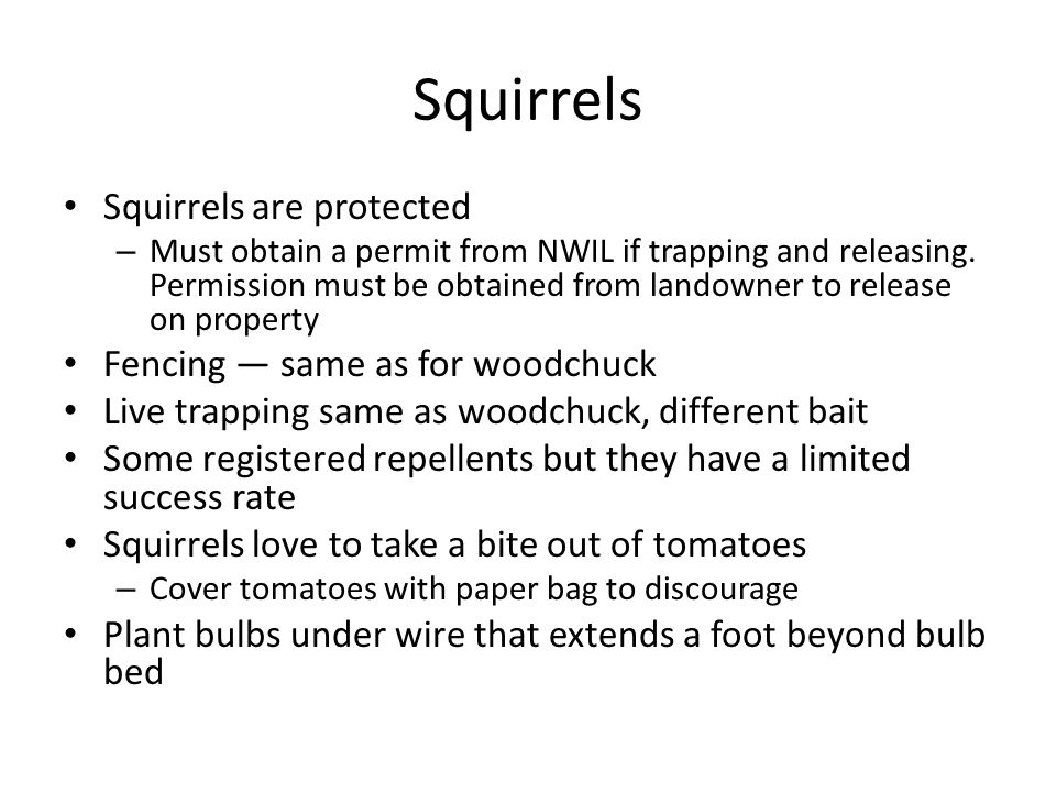 Squirrels Squirrels are protected – Must obtain a permit from NWIL if trapping and releasing.