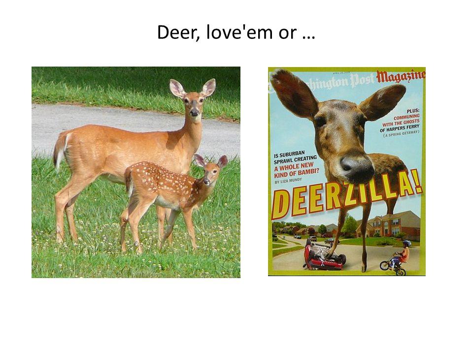 Deer, love em or …