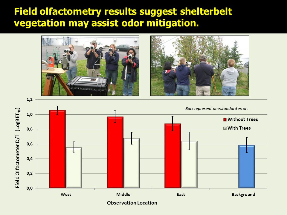 Field olfactometry results suggest shelterbelt vegetation may assist odor mitigation.