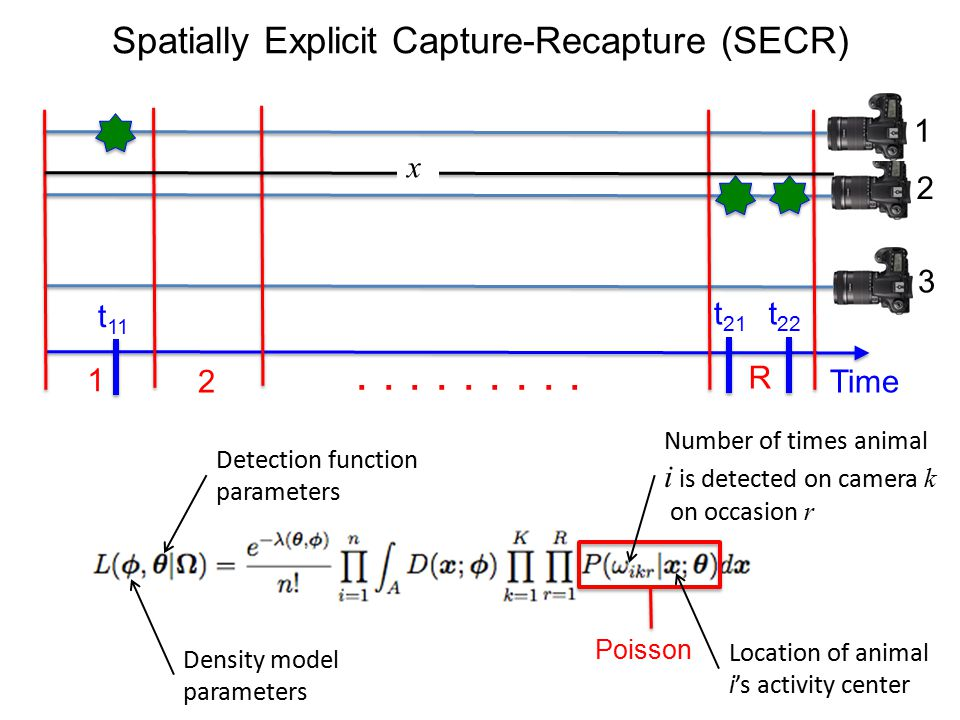 Spatially Explicit Capture-Recapture (SECR) Time 1 2 R......... t 11 t 21 t 22 1 2 3 x Poisson Location of animal i's activity center Number of times