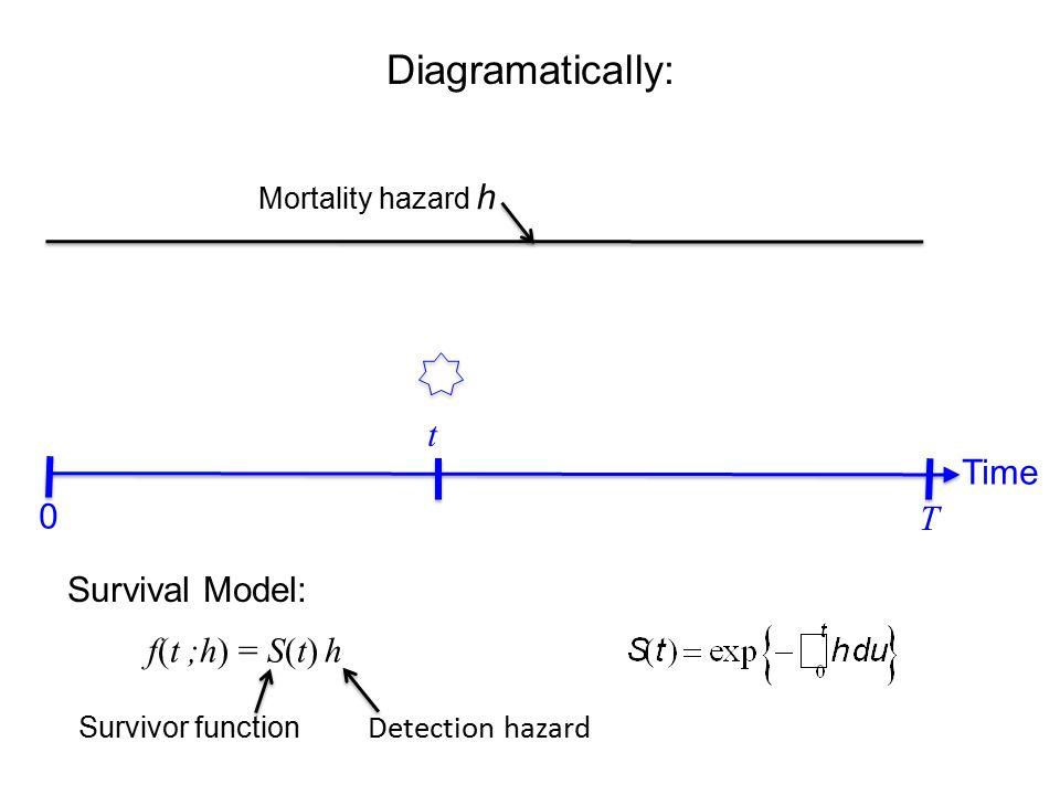 Diagramatically: Time t T 0 Mortality hazard h f(t ;h) = S(t) h Survivor function Survival Model: Detection hazard