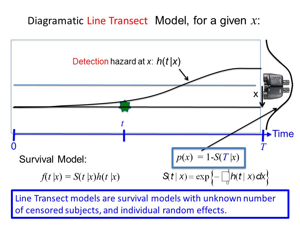 Line Transect Models Continuous time likelihood with individual random effect (with Poisson rather than Binomial/multinomial) Perpendicular distance distribution, conditional on detection A: Hayes and Buckland (1983) are to blame Q: Why is this ignored??