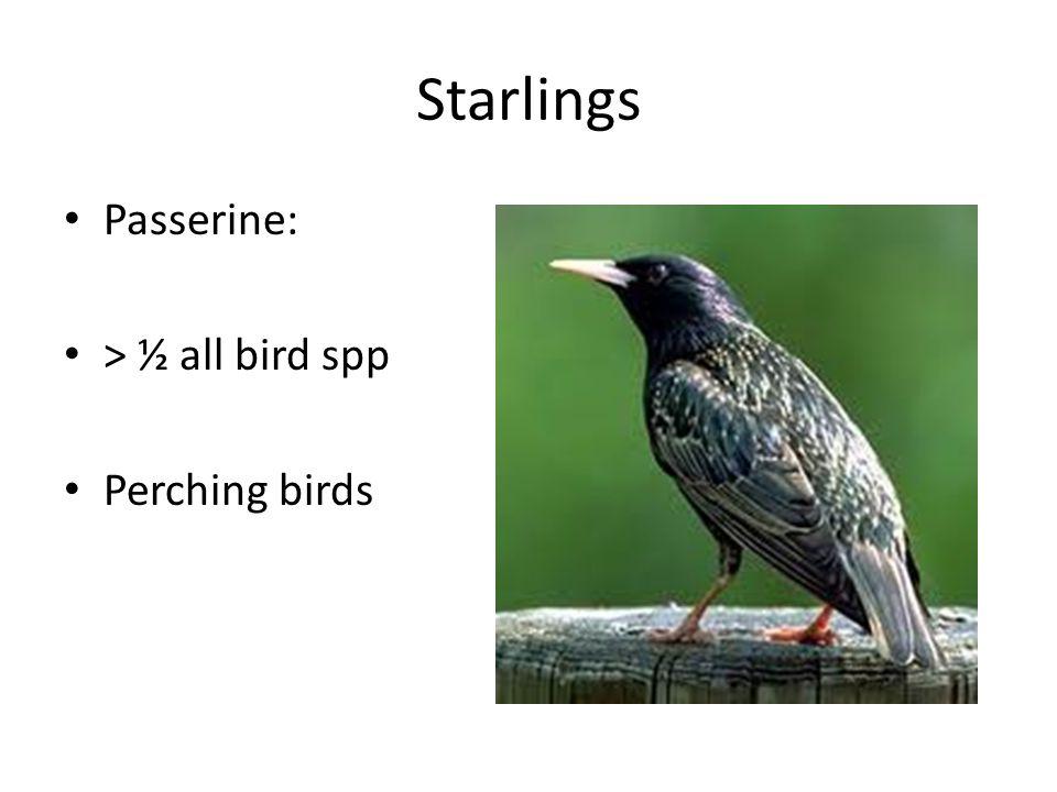 Starlings Passerine: > ½ all bird spp Perching birds