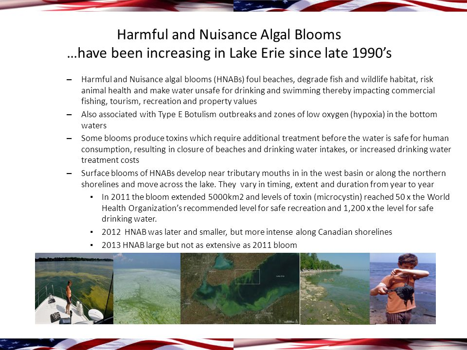 Harmful and Nuisance Algal Blooms …have been increasing in Lake Erie since late 1990's – Harmful and Nuisance algal blooms (HNABs) foul beaches, degrade fish and wildlife habitat, risk animal health and make water unsafe for drinking and swimming thereby impacting commercial fishing, tourism, recreation and property values – Also associated with Type E Botulism outbreaks and zones of low oxygen (hypoxia) in the bottom waters – Some blooms produce toxins which require additional treatment before the water is safe for human consumption, resulting in closure of beaches and drinking water intakes, or increased drinking water treatment costs – Surface blooms of HNABs develop near tributary mouths in in the west basin or along the northern shorelines and move across the lake.
