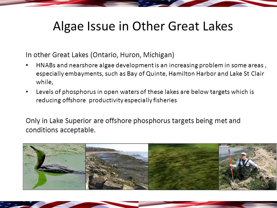 Algae Issue in Other Great Lakes In other Great Lakes (Ontario, Huron, Michigan) HNABs and nearshore algae development is an increasing problem in some areas, especially embayments, such as Bay of Quinte, Hamilton Harbor and Lake St Clair while, Levels of phosphorus in open waters of these lakes are below targets which is reducing offshore productivity especially fisheries Only in Lake Superior are offshore phosphorus targets being met and conditions acceptable.