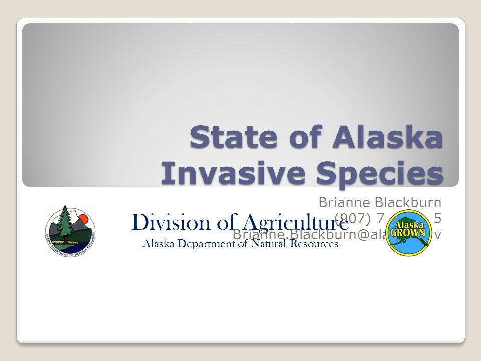 Division of Agriculture Alaska Department of Natural Resources State of Alaska Invasive Species Brianne Blackburn (907) 745-8785 Brianne.Blackburn@alaska.gov