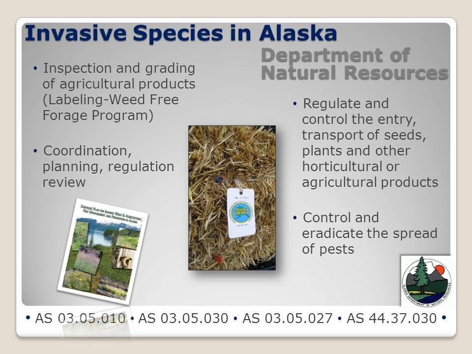 Invasive Species in Alaska AS 03.05.010 AS 03.05.030 AS 03.05.027 AS 44.37.030 Department of Natural Resources Inspection and grading of agricultural products (Labeling-Weed Free Forage Program) Coordination, planning, regulation review Regulate and control the entry, transport of seeds, plants and other horticultural or agricultural products Control and eradicate the spread of pests