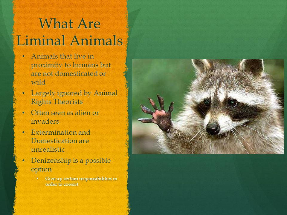 What Are Liminal Animals Animals that live in proximity to humans but are not domesticated or wild Animals that live in proximity to humans but are not domesticated or wild Largely ignored by Animal Rights Theorists Largely ignored by Animal Rights Theorists Often seen as alien or invaders Often seen as alien or invaders Extermination and Domestication are unrealistic Extermination and Domestication are unrealistic Denizenship is a possible option Denizenship is a possible option Give up certain responsibilities in order to coexist