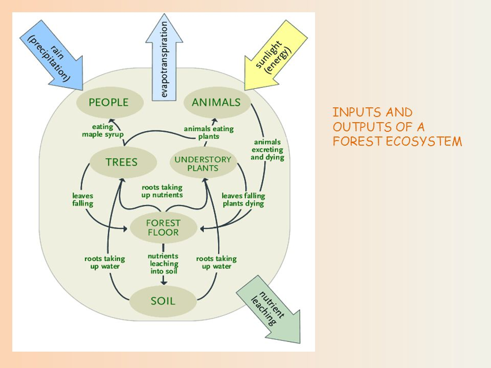 INPUTS AND OUTPUTS OF A FOREST ECOSYSTEM