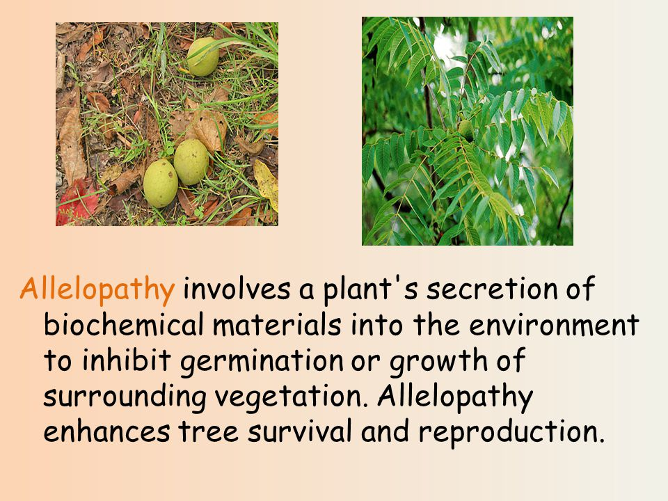 Allelopathy involves a plant s secretion of biochemical materials into the environment to inhibit germination or growth of surrounding vegetation.