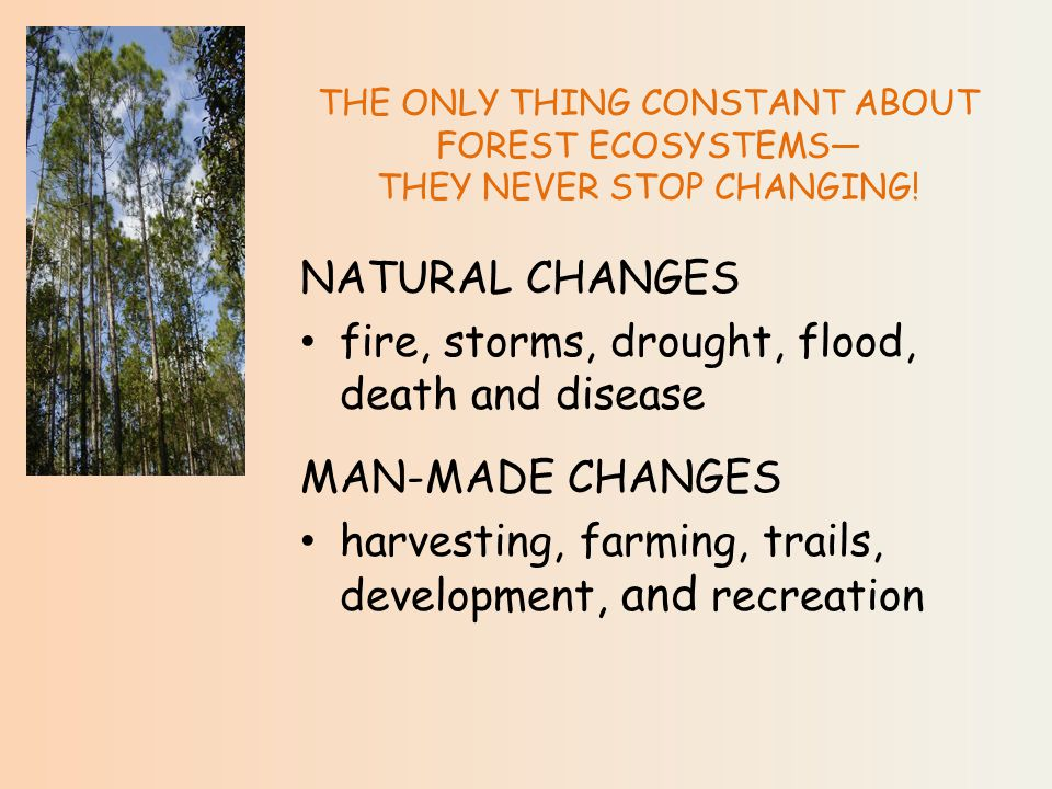 THE ONLY THING CONSTANT ABOUT FOREST ECOSYSTEMS— THEY NEVER STOP CHANGING.